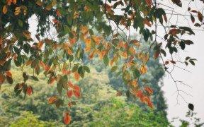 hanoi automne vietnam