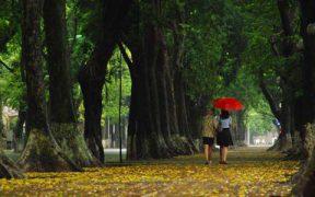 La diversité des arbres à Hanoi