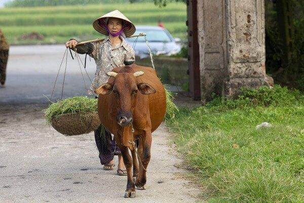 chapeau-conique-partout-au-vietnam