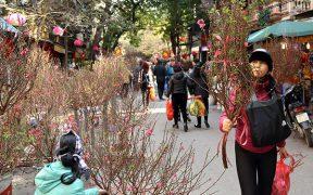 acheter des arbres pour le nouvel an a hanoi