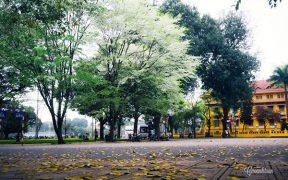 Les fleurs sua florissent dans les rues et les parcs