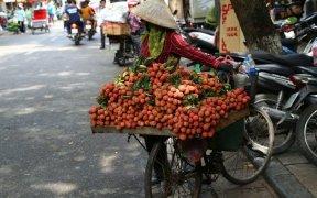 vendeuse ambulante de litchi hanoi