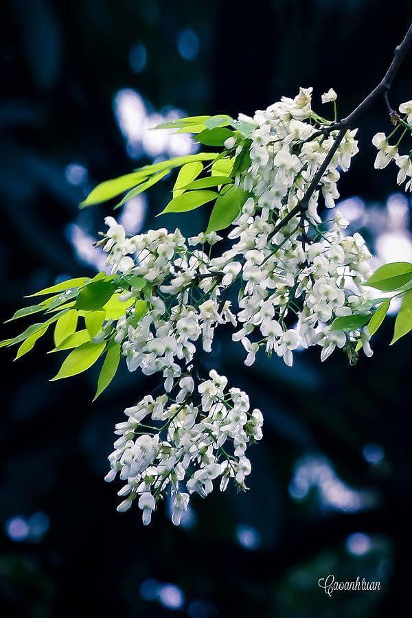 les 12 saisons de fleurs le blog de hanoi. Black Bedroom Furniture Sets. Home Design Ideas